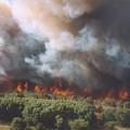 Waldbrand Niedersachsen-5
